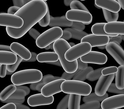 How to Avoid Listeria Contamination