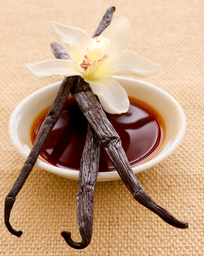 Vanilla extract, vanilla beans and vanilla flower
